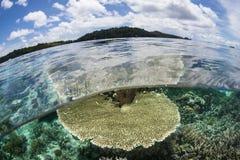 Raja Ampat Reef Lizenzfreie Stockbilder