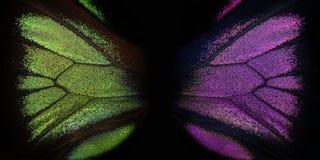 Raja Brooke tropiska Birdwings- buttelfly Arkivbilder