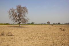 Rajasthan cênico imagens de stock