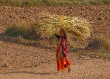RAJASTHAN, INDIEN - 16. MÄRZ 2018: Indische Frau, die an Feld arbeitet Stockbilder