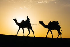Rajasthan travel background - camel silhouette in dunes of Thar desert on sunset Royalty Free Stock Photos