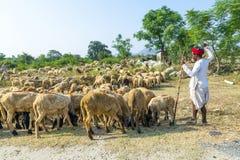 Rajasthani部族人佩带 库存照片