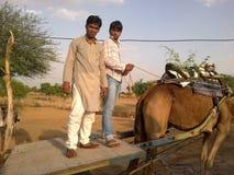 INDIA RAJASTHAN CAMEL CART TRANSPORTATION CULTURE, CAMEL RIDING stock images