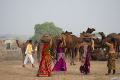 The Rajasthani girls. Rajasthani girls collecting camel stools from the fair ground for using them as fuel in their home Stock Photo