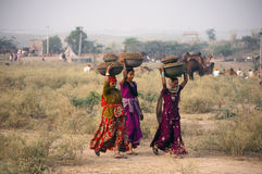 The Rajasthani girls. Rajasthani girls collecting camel stools from the fair ground for using them as fuel in their home Royalty Free Stock Photo