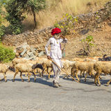 A Rajasthani tribal goatherd Royalty Free Stock Photo