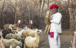 Rural Herding. Rajasthani tribal man wears traditional colorful casual and holding lamb in hand royalty free stock image