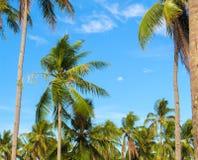 Raju krajobraz z coco drzewkami palmowymi Egzotyczny miejsce widok przez drzewko palmowe sylwetek Zdjęcia Royalty Free