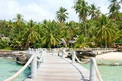 raju mola tropikalny drewniany Zdjęcie Royalty Free