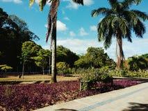 Raju ogród Obrazy Stock