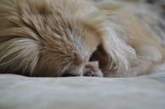 Raju pies zdjęcie royalty free