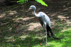 Raju żuraw pod drzewem Zdjęcie Stock