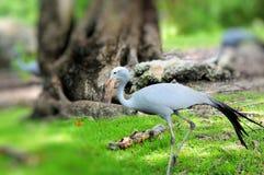 Raju żurawia odprowadzenie Obraz Royalty Free