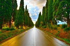 Rak boulevard för Bolgheri berömd cypressträd på solnedgång mar. Arkivfoto