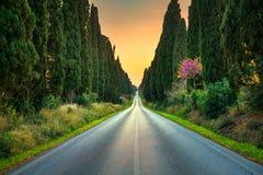 Rak boulevard för Bolgheri berömd cypressträd på solnedgång mar. royaltyfri foto