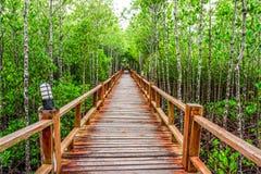 Rak trägångbana och överflödande mangroveskog i Thailand Arkivbilder