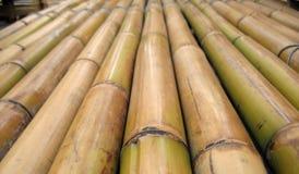 raka bambupoler arkivfoton