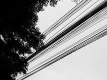Raka linjer, åtskilliga linjer av ljusa poler och skuggor av stora träd Arkivbilder