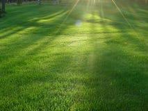 Rakad gräsmatta önskar att lagra värme som samlar strålar Royaltyfri Foto