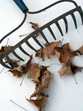 Rake. And leaves Stock Photography