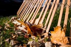 Free Rake And Leaves Stock Photo - 16592570