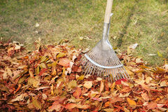 Free Rake And Leaves Royalty Free Stock Photography - 29397467