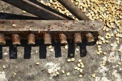 Rake använde för att fördela kaffebönor Royaltyfria Foton