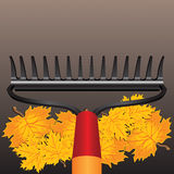 Rake and autumn leaves Stock Image