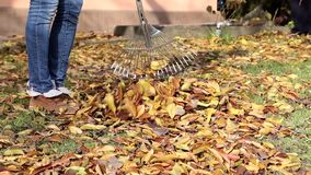 Raking autumn leaves stock video