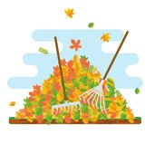 Rake collecting fallen leaves Royalty Free Stock Image