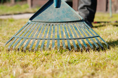 Rake collecting grass clippings. Outdoor photography of a rake collecting grass clippings Stock Photo