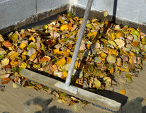 Rake in the dry autumn leaves Stock Photography