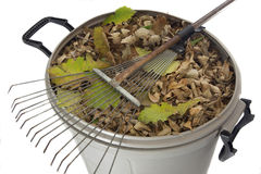 Rake and dry leaves in garbage bin Royalty Free Stock Photo