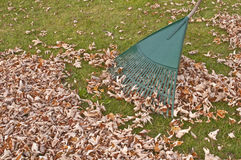 Rake, fall gardening work. Royalty Free Stock Photography