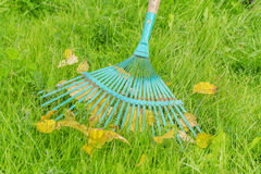 Rake and fall leaves on green grass Stock Photos