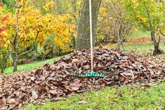 Rake with fallen leaves at autumn royalty free stock photos