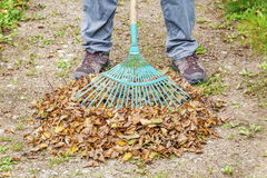 Rake on the fallen leaves Royalty Free Stock Photography