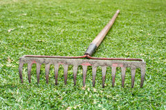 Rake in grass. A steel tine rake laying in the grass Royalty Free Stock Images