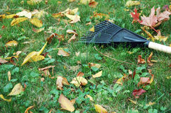 Rake in the grass. Royalty Free Stock Photography