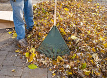 Rake and heap of leaves Royalty Free Stock Photo