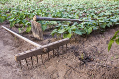 Rake and hoe on farm Royalty Free Stock Photos