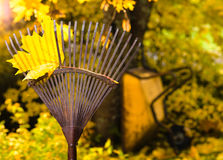 Rake and leaf Royalty Free Stock Photo