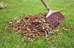 Rake the leaf together. Rake the leaves together in the garden stock photos