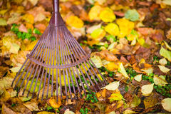 Rake and leafs. Old rake and maple leafs on the ground, horizon shot stock images