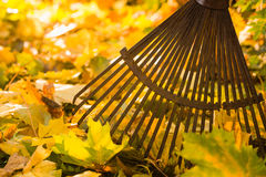 Rake and leafs Royalty Free Stock Image