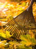 Rake and leafs Stock Image