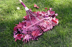 Rake and leaves. Fall yard cleaning of leaves stock image