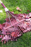 Rake and leaves. Closeup red rake and maple leaves on green lawn stock photography