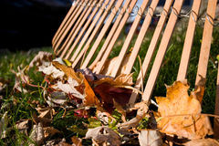 Rake and Leaves. A Rake and Leaves in the Fall Stock Photo