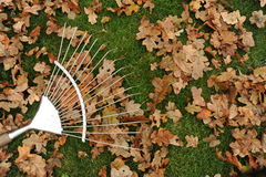 Rake and leaves. Photograph of a lawn rake on grass with oak leaves Royalty Free Stock Photography